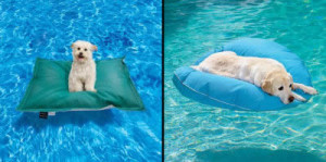 pet pool lounger