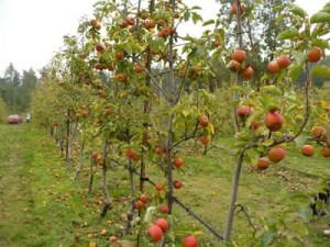 Ravenskill Orchard