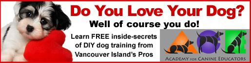 ACE Free Dog Training - Seniors101 May 2016